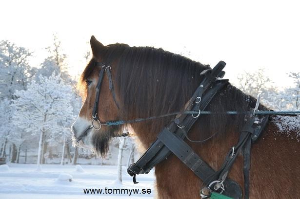 Häst@Högbo