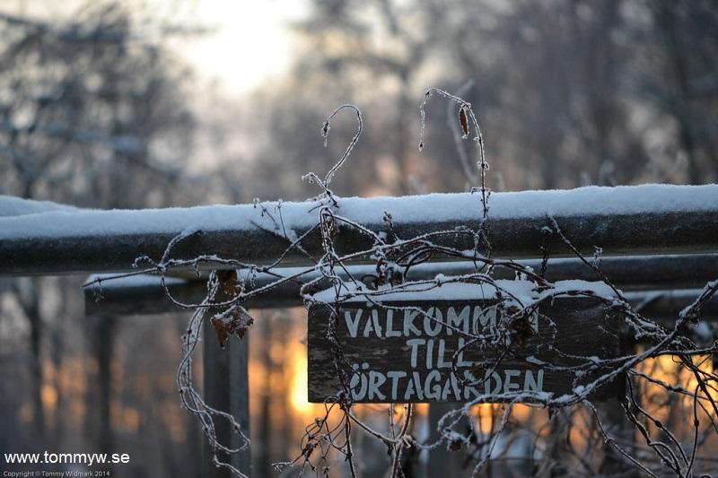 Högbo i vintras